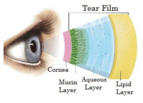 diagram of the tear film layers